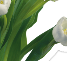 Bunch of white tulips Sticker