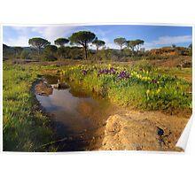 Provence springtime Poster