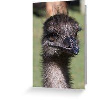 Emu Portrait Greeting Card