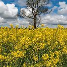 Sea of Yellow by Adrian Evans