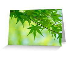 Green leaves of Japanese maple Greeting Card
