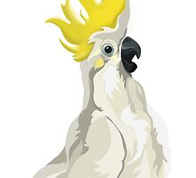 Sulphur Crested Cockatoo by Mesomex