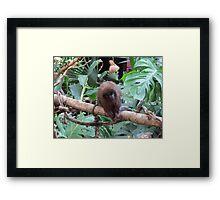 Red Titi Monkey Framed Print