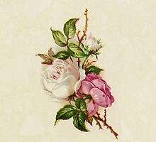 Chic Girly Pink White Vintage Rose Painting  by Maria Fernandes