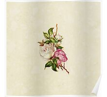 Chic Girly Pink White Vintage Rose Painting  Poster