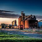 Sugar beet plant at sunset.. by raberry