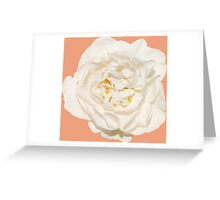 White tender rose Greeting Card