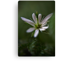 White & Green (from willd flowers collection) Canvas Print