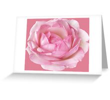Charming pink rose Greeting Card