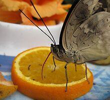 Butterfly & OJ by Zeeshan Mujtaba
