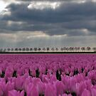 Tulips from Holland by Adri  Padmos