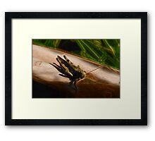 Grasshopper Macro Framed Print