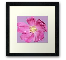 Soft purple flower Framed Print