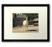 Silly Lama Framed Print