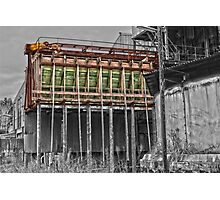 Timber Hopper Photographic Print
