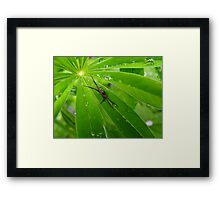 Little wee Crab Spider On a Lupine Framed Print