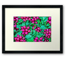 Food - Fresh radish vegetables Framed Print