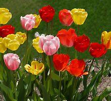 Tulip Hug by Kenneth Hoffman