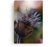 Marvelous (from wild flowers collection) Canvas Print