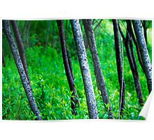 green landscape with trees Poster
