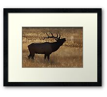 Morning Bugle Framed Print