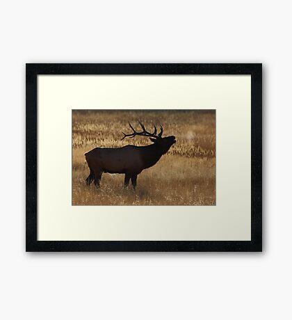 Morning Bugle Framed Print