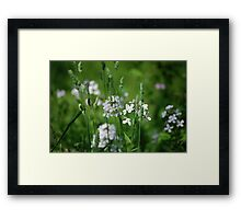 Beyond the grass Framed Print