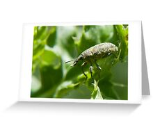 weevil balance Greeting Card