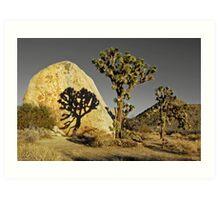 Joshua Tree National Park--shadow/rock Art Print