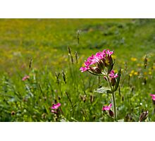 Spring Meadow Photographic Print