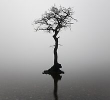Misty lone tree by Grant Glendinning