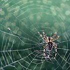 Spider'keh by David Charniaux