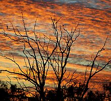 Sunrise Splendour - Gunnedah NSW Australia by Bev Woodman