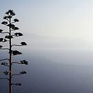 Sea of Tranquility by George Parapadakis (monocotylidono)