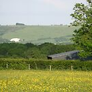 Across to Okeford Hill, Dorset by naturalimages