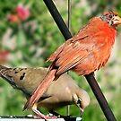 Bird Question. by tserio
