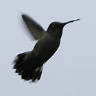 Hummingbird off with a meal; La Mirada, CA USA All Rights Reserved Hedger Photography by leih2008