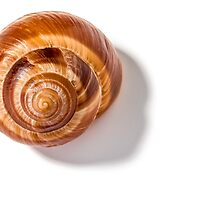 Snail Shell by MaxalTamor