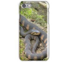 Snake on a Log iPhone Case/Skin