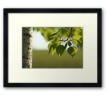 Under The Poplar Tree Framed Print
