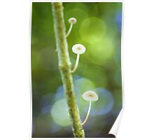 'Shrooms on a stick Poster