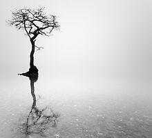 Misty Tree in water by Grant Glendinning
