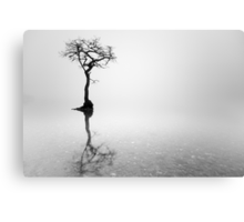 Misty Tree in water Canvas Print
