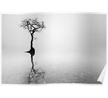 Misty Tree in water Poster
