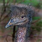 I Know I Am A Good Looking Emu by miroslava