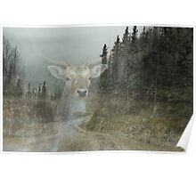 Forest Dweller Poster