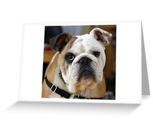 Special Bulldogs Greeting Card