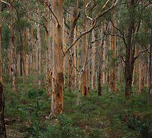 Forest by Blake  Mckenzie