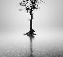 Loch Lomond Tree in the mist by Grant Glendinning