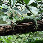 Iguana by Michelle *